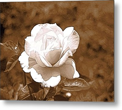Rose In Sepia Metal Print by Victoria Sheldon