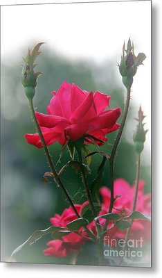 Rose In The Fogg Metal Print