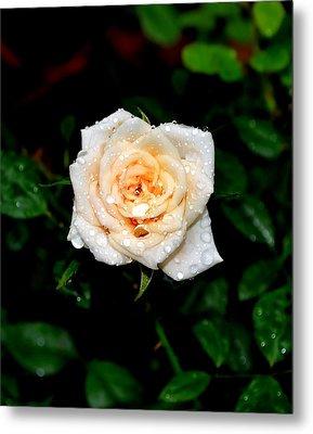 Rose In The Rain Metal Print by Deena Stoddard