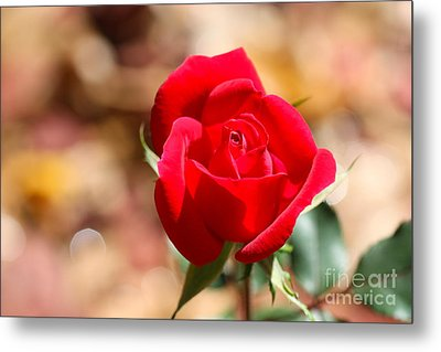 Rose Morning Metal Print by Cathy Dee Janes