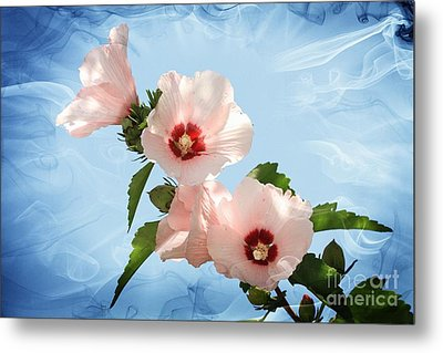 Metal Print featuring the photograph Rose Of Sharon by Geraldine DeBoer