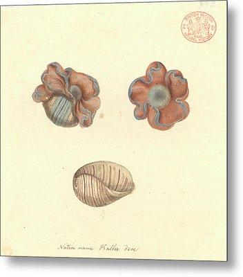 Rose-petal Bubble Shell Metal Print
