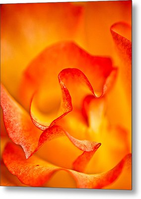Rose Petals Closeup Metal Print