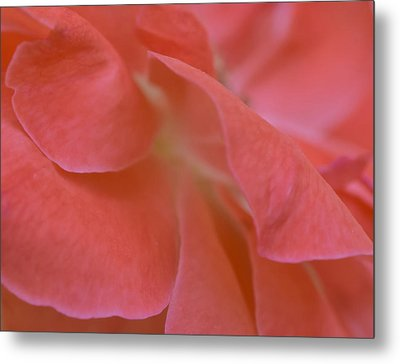 Metal Print featuring the photograph Rose Petals by Stephen Anderson