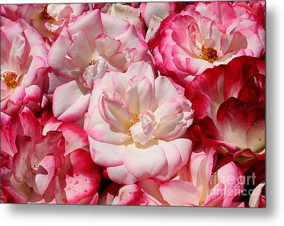 Rose River Metal Print by Jeanette French