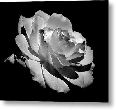 Rose Metal Print by Rona Black