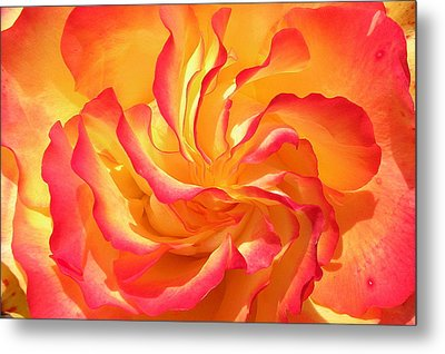Rose Swirl Metal Print