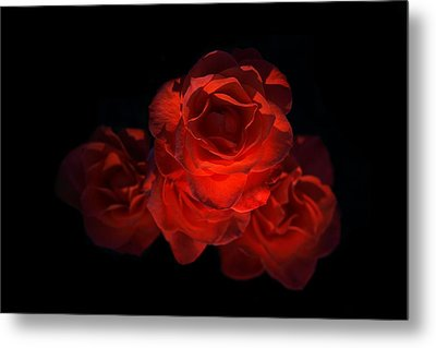 Metal Print featuring the photograph Rose Three by David Andersen