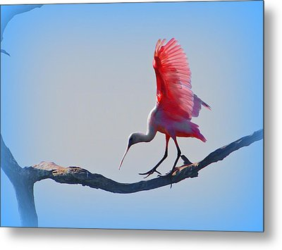 Metal Print featuring the photograph Roseate Spoonbill by David Mckinney