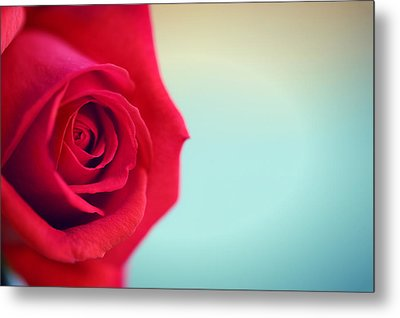 Metal Print featuring the photograph Roseblue by Lorella  Schoales