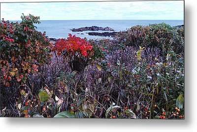 Metal Print featuring the photograph Rosehip by Mim White