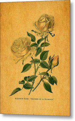 Roses Are Golden Metal Print by Sarah Vernon