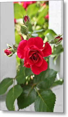 Metal Print featuring the photograph Roses Are Red by Joann Copeland-Paul