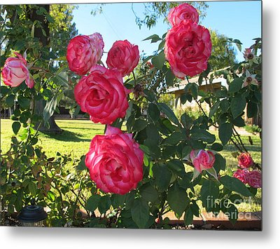 Roses For Your Valentine Metal Print