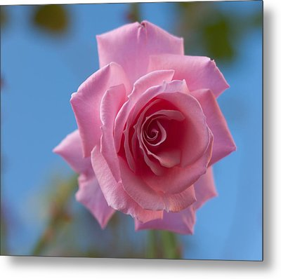 Roses In The Sky Metal Print by Miguel Winterpacht