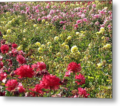 Metal Print featuring the photograph Roses Roses Roses by Laurel Powell