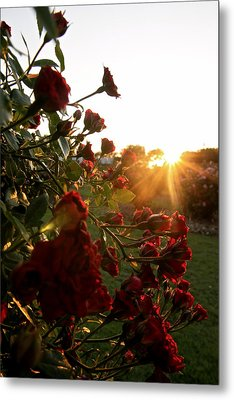 Roses Metal Print by Snow  White