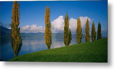 Row Of Poplar Trees Along A Lake, Lake Metal Print by Panoramic Images