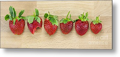 Row Of Strawberries  Metal Print by Svetlana Sewell