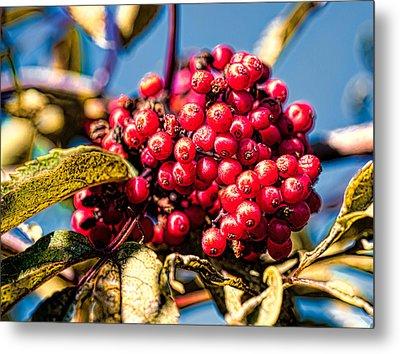 Rowan Berries Metal Print by Leif Sohlman