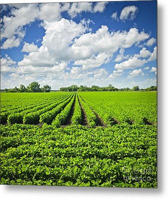 Rows Of Soy Plants In Field Metal Print