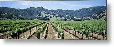 Rows Of Vine In A Vineyard, Hopland Metal Print