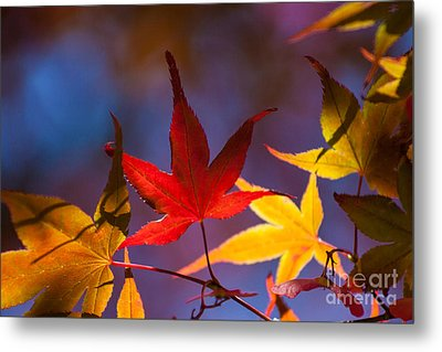 Royal Autumn B Metal Print by Jennifer Apffel