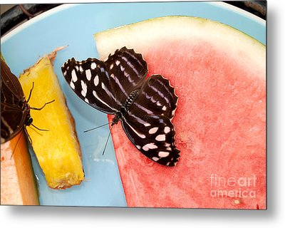 Metal Print featuring the photograph Royal Blue Butterfly by Eva Kaufman