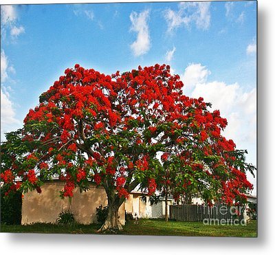 Royal Panciana Tree Metal Print