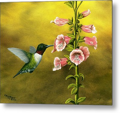 Ruby Throated Hummingbird And Foxglove Metal Print