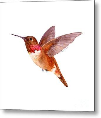 Rufous Hummingbird Metal Print by Amy Kirkpatrick