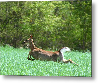 Metal Print featuring the photograph Run Forest Run by Neal Eslinger