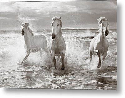 Run White Horses II Metal Print