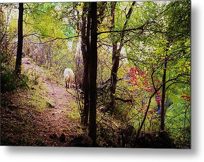 Running Away  Metal Print by Shirley Heier