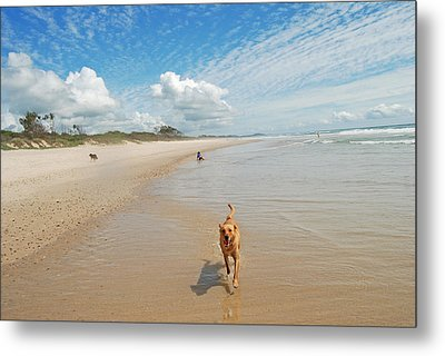 Metal Print featuring the photograph Running Free 2 by Ankya Klay