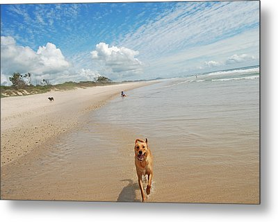 Metal Print featuring the photograph Running Free 3 by Ankya Klay