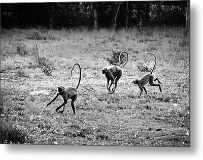 Running Gibbons Metal Print by Money Sharma