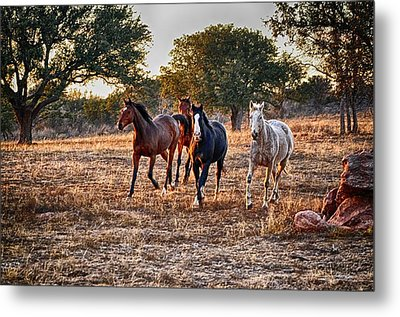 Running Horses Metal Print by Kristina Deane