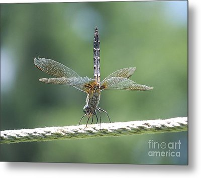 Running On All Six Metal Print by Eunice Miller