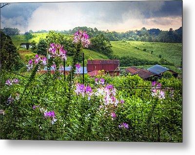 Rural Garden Metal Print by Debra and Dave Vanderlaan