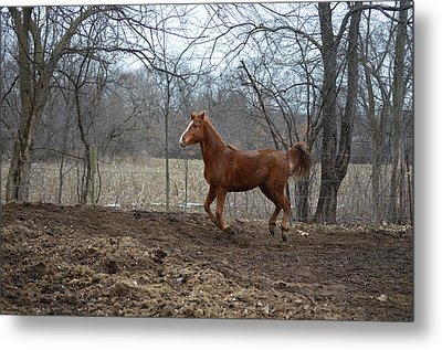 Russian Arabian2 Metal Print by Jennifer  King