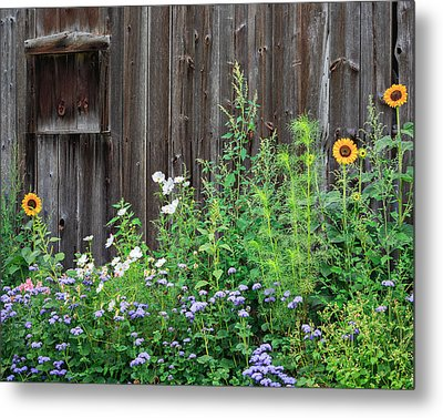 Rustic Barn Wood And Summer Flowers Metal Print by Bill Wakeley