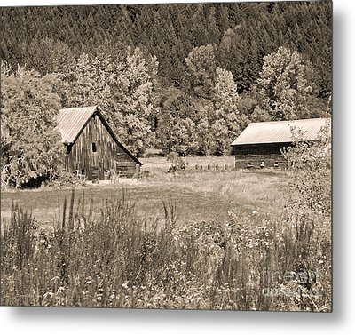 Rustic Beauty In Sepia Metal Print by Connie Fox