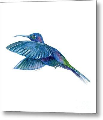 Sabrewing Hummingbird Metal Print by Amy Kirkpatrick