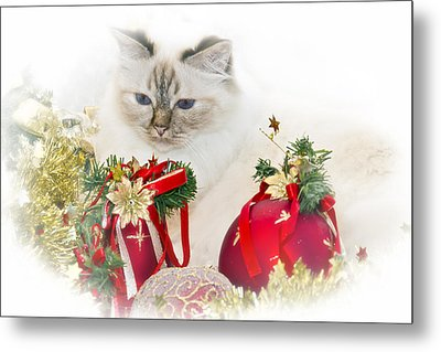 Sacred Cat Of Burma Christmas Time II Metal Print by Melanie Viola
