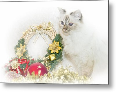 Sacred Cat Of Burma Christmas Time Metal Print by Melanie Viola