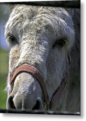 Sad Eyes Metal Print by John Holloway
