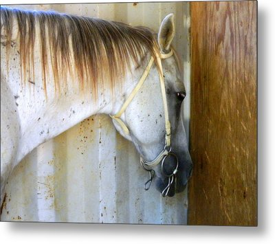 Metal Print featuring the photograph Saddle Break by Kathy Barney