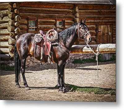 Saddled And Waiting Metal Print