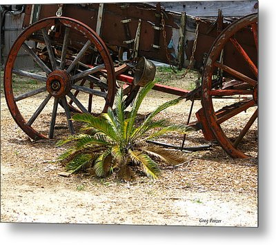 Saga Palm Metal Print by Greg Patzer